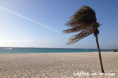 fast facts: aruba - coffee in a cup