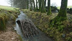 I love this--a way station for otters and water sprites.  Andy Goldsworthy: Twigs & Branches