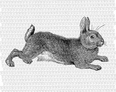 Antique Clip Art Hopping Hop Bunny Rabbit by luminariumgraphics, $2.20