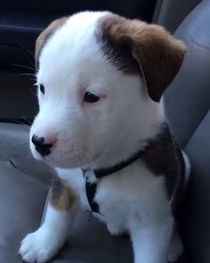 Pupper is confused by his own hiccups - Mimimi - Dogs Cute Funny Animals, Cute Baby Animals, Funny Dogs, Animals And Pets, Cute Puppies, Cute Dogs, Dogs And Puppies, Doggies, Cute Animal Videos
