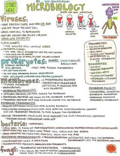 microbiology! Thanks Janie, you're the best :) This poster is going to be a life saver. I can see this now.