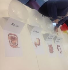 Digestive System- Best Lesson Ever! Make edible poo to show how digestive system works! ACPS Grade 5/6: