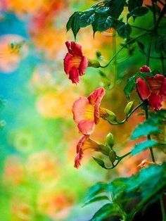 Красота цветов мира the beauty of the world of flowers