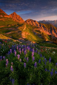 Blooming Sunrise Gabi Lach-Nice to think we have such a beautiful planet, huh? Beautiful World, Beautiful Places, Beautiful Pictures, Nature Scenes, Nature Pictures, Belle Photo, Beautiful Landscapes, The Great Outdoors, Wonders Of The World