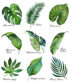 Tropical Leaf Free Printable Art {Series of 9} | The Happy Housie Tropical Leaves, Tropical Plants, Tropical Decor, Cactus Plants, Tropical Colors, Flowering Plants, Summer Plants, Tropical Flower Arrangements, Palm Tree Leaves