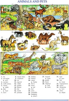 112 - ANIMALS AND PETS A - Picture Dictionary - English Study, explanations, free exercises, speaking,…