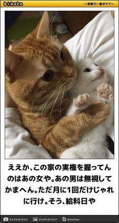 Animals And Pets, Baby Animals, Funny Animals, Animal Pictures, Funny Pictures, Wedding Picture Poses, Service Dogs, Cats And Kittens, Funny Cats