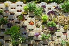 Take a tour of this amazing vertical succulent garden in California