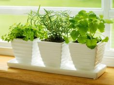 Have some extra space in your yard or garden? Plant a fresh and simple herb garden only steps away from the kitchen.