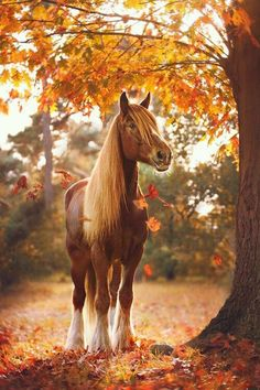 Horse of the week - 2| This horse is beautiful! The way the picture is taken is also beautiful! 🐴