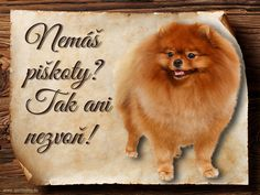 Cedulka Pomeranian - Piškoty Pomeranian, Pomeranians