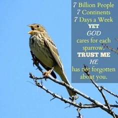 Kim Speaks Up - God's Eyes are on the Sparrow