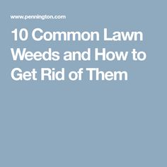 10 Common Lawn Weeds and How to Get Rid of Them