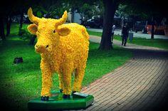 Vaca Ipê-Amarelo by Gabriel Côrtes, Brazil 2012