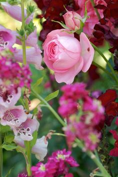 Pink rose, foxglove and other shades of pink garden flowers. Love the lady beetles.