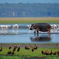 Lake St.Lucia in KwaZulu-Natal, South Africa. BelAfrique your personal travel planner - www.BelAfrique.com