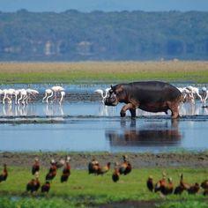 Lake St.Lucia in KwaZulu-Natal, South Africa. BelAfrique your personal travel planner - www.BelAfrique.com