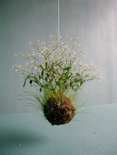 Het kweken in kleine ruimtes! (2) Hangende tuinen! - Plazilla.com