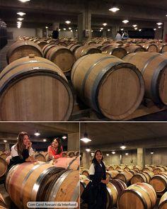 georges duboeuf, vinicola, vinho, frança, borgonha, natureza, gastronomia, viagens, parreira, uva, passeio, romance,