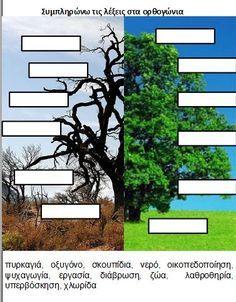 δασος φυλλα εργασιας - Αναζήτηση Google