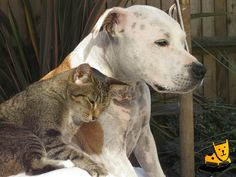 Dogs Cats and Kittens Pet care tips http://petdesk.net/