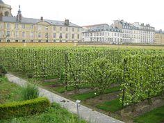 All sizes | Fruit trees, Potager du Roi | Flickr - Photo Sharing!