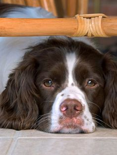Learn how to calm your #pet during a storm.