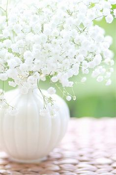 Baby's Breath- I once loathed this flower. So sweet and beautiful