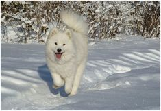 Funny and cute animals in winter 23