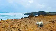 #warrnambool #dog #staffy #americanstaffordshireterrier #beach  #pet  #coast by cre8tor_0
