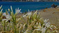Crete, Big, Plants, Photography, Photograph, Fotografie, Photoshoot, Plant, Planets