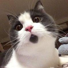 banye Madara the cat with goatee