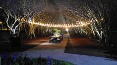 Stunning night-time garden wedding scene at Dallas Aboretum & Botanical Gardens!