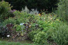 Les plantes aromatiques à planter en octobre