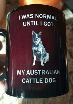 I was normal until I got my Australian Cattle Dog [a little too true]