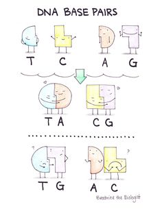 DNA The Double Helix, Coloring Worksheet Chemistry