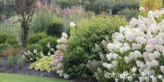 Ogród nie tylko bukszpanowy - część III - strona 753 - Forum ogrodnicze - Ogrodowisko