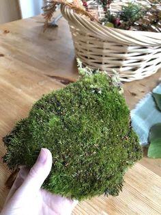 Moss Garden, Garden Pots, Garden Ideas, Moss Terrarium, Terrariums, Free Garden Planner, Types Of Moss, Buy Moss, Growing Moss