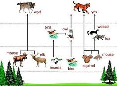 Science 1: Food Chains