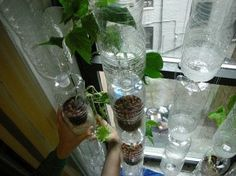 Home made vertical hydroponics garden wall using re-purposed water bottles.