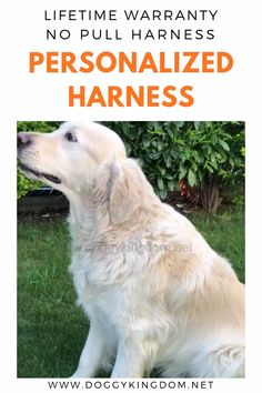 Lifetime Warranty Personalized Doggykingdom® NO PULL Harness Dog Lover Gifts, Dog Lovers, Lovers Gift, Dog Training Tips, Agility Training, Training Classes, Training Videos, Easiest Dogs To Train, Love Dogs