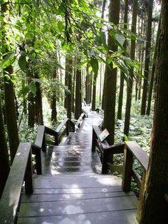 Alishan forest train  | alishan forest | taiwan/china trip // | Pinterest