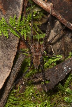 A wolf spider is very difficult to catch because it has very good vision and is very fast