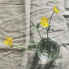 """Gefällt 1,351 Mal, 37 Kommentare - Mirta (@modernbotanics) auf Instagram: """"when the father of your son picks wildflowers for you to bring in a bit of spring 💛 wishing you a…"""" Wild Flowers, Wish, Sons, Father, Bring It On, Spring, Plants, Friday, Inspiration"""