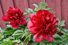 Rakenna riukuaita   Meillä kotona Joko, Flowers, Plants, Plant, Royal Icing Flowers, Flower, Florals, Floral, Planets