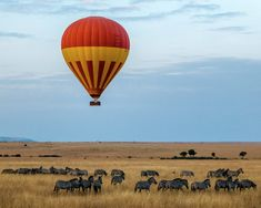 Escape the crowds on this affordable fly-in Kenya Safari camping at exclusive campsites in the private game reserves of Selenkay at Amboseli and Ol Kinyei at Masai Mara. Enjoy game drives, bush walks and night drives with expert guides. Tanzania, Monte Kilimanjaro, Diani Beach, Bon Plan Voyage, Air Balloon Rides, Countries To Visit, G Adventures, African Countries, Travel Images