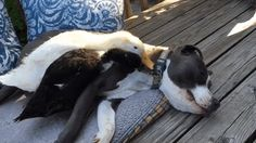 This Couple Rescued 7 Animals And This Is How They Live Now   Bored Panda