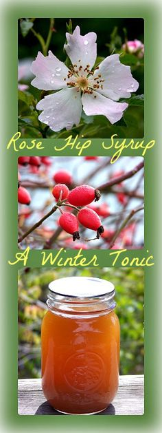 Water bath can rose hip syrup for winter vitamin C
