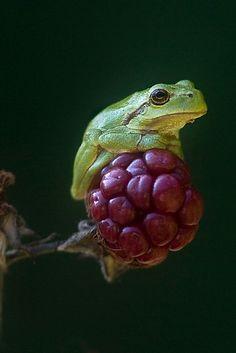 Una rana posando en una flor.