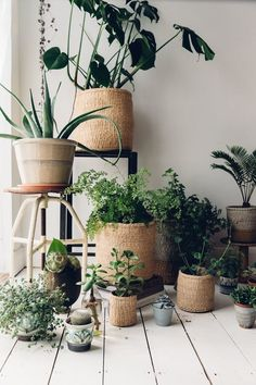 5 Reasons Why Every Home Needs Indoor Plants